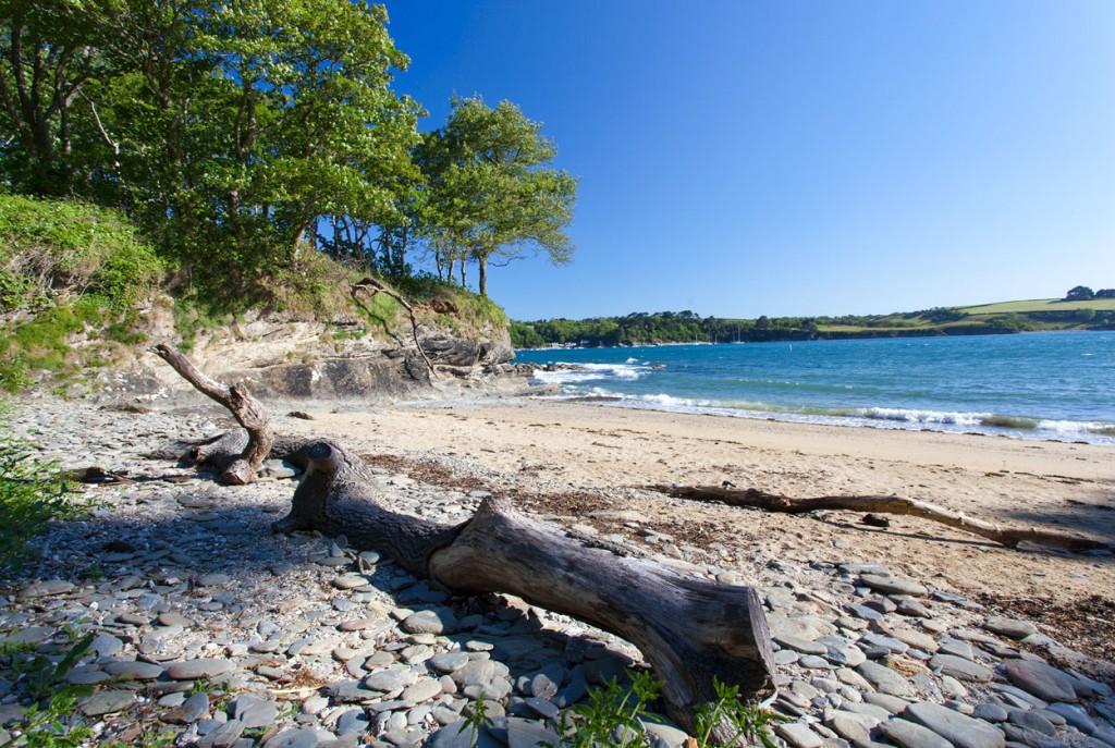 bosahan-cove-driftwood